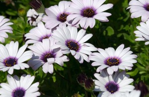 Растения удивительные существа