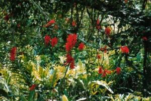 Новые виды растений